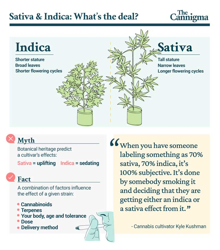 Indica vs Sativa: What's the Difference?