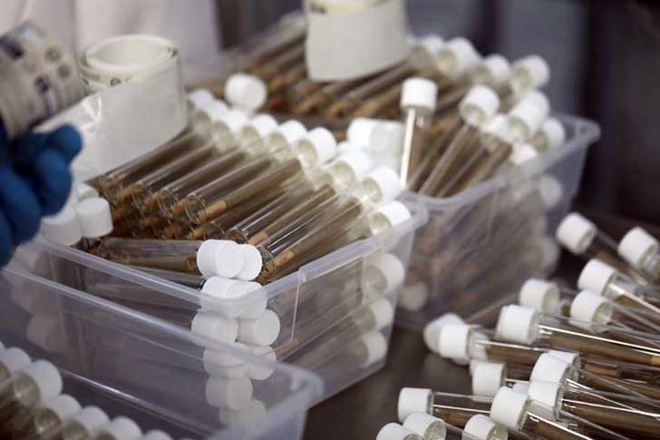 Individually packaged joints are prepared at a processing facility.